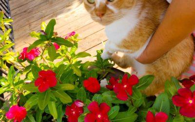 אני החתולה והפרחים